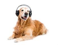 在耳机的狗 免版税图库摄影