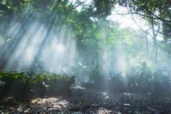 在耶稣光下的雨林 免版税库存照片