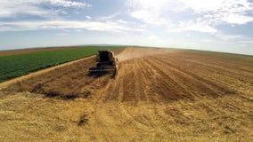 在联合收获的空中飞行麦子行 影视素材