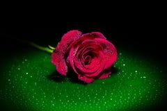 在聚光灯的红色玫瑰 免版税库存图片