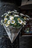 在聚宝盆里面的雏菊 免版税库存图片