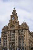 在肝脏大厦的肝脏鸟在利物浦英国 库存图片