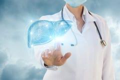 在肝脏的尿科医师点击 免版税库存照片