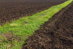 在肥沃的土地的路草 免版税库存照片