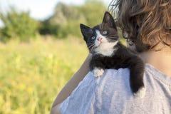 在肩膀的小猫 免版税库存图片