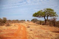 在肯尼亚的大草原的树 免版税库存照片