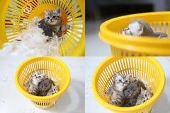 在胆怯中的小小猫, multicam,栅格2x2屏幕 免版税库存照片