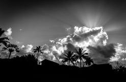 在背后照明的棕榈树在考艾岛海岛(HI)上 免版税库存图片