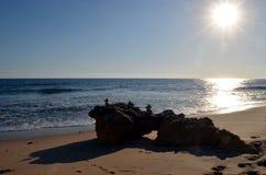 在背后照明的葡萄牙冰砾 免版税库存照片