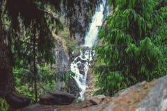 在背景大Jogini瀑布的绿色杉木在Vashisht 库存照片
