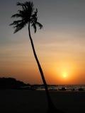 在背景日落的唯一棕榈树 免版税库存照片
