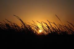 在背景日落的草 库存照片