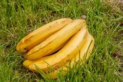 在背景木头的香蕉 库存图片