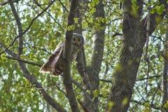在背景森林的熬夜的人鸟 库存图片