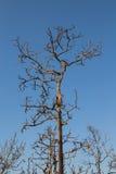 在背景的不生叶的树 免版税库存图片