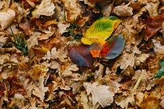 在背景的几片大叶子与秋天最近五颜六色的叶子 库存图片