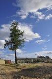 在背景的孤独的绿色杉木与蓝天和白色云彩 免版税库存图片