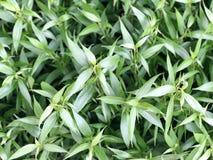 在背景的小绿色叶子 免版税图库摄影