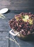 在背景的新鲜红色沙拉莴苣叶子在一件黑纺织品和金属片在黑暗的背景年迈的木 免版税库存图片