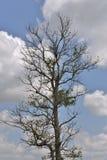 在背景的树棚子叶子 库存图片