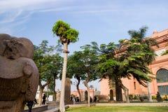 在背景的棕榈在开罗,埃及 免版税库存照片
