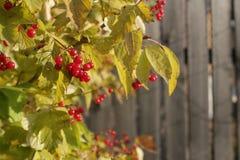 在背景的秋叶 免版税图库摄影