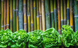 在背景的竹子种植的绿色莴苣 免版税图库摄影