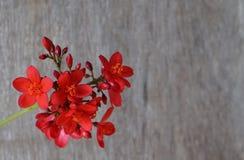 在背景的红色小的花 库存照片