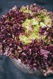 在背景的红色莴苣叶子在一件黑纺织品和金属片在年迈的木板葡萄酒vert的黑暗的背景 免版税库存照片