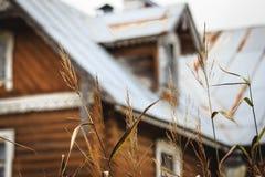在背景的草在家 免版税库存照片