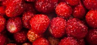 在背景的草莓 图库摄影