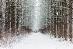 在背景的降雪 免版税图库摄影