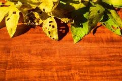 在背景的黄色湿秋叶黑暗的老木头 库存图片