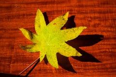 在背景的黄色湿秋叶黑暗的老木头 免版税库存照片