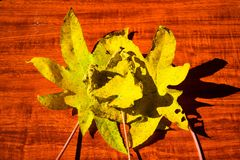 在背景的黄色湿秋叶黑暗的老木头 免版税库存图片
