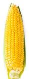 在背景的黄色甜玉米 免版税库存照片