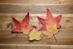 在背景的黄色红色秋叶 库存照片