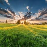 在背景美好的日落的绿草 库存图片