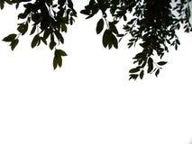 在背景顶部的热带叶子 库存图片