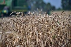 在背景combine_11的成熟麦子 免版税图库摄影
