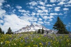 在胡德山,俄勒冈倾斜的夏天野花  库存照片