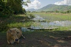 在胡志明小道附近的村庄,越南 库存图片