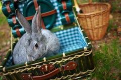 在胸口的兔子与器物 图库摄影
