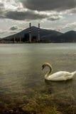 在能源厂前面的偏僻的天鹅游泳 图库摄影