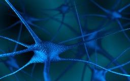 在脑子的神经元 库存图片