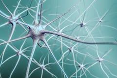 在脑子, 3D的神经元神经网络例证  库存图片