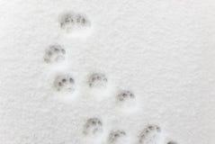 在脚印的Ð ¡在雪 免版税库存照片