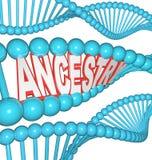 在脱氧核糖核酸研究的祖先词您的谱学祖先 免版税库存图片