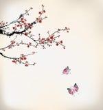 蝴蝶和腊梅 库存图片