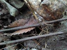 在腐朽的叶子旁边的平行的棍子 免版税库存图片